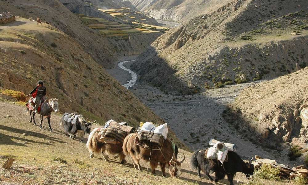 upper dolpo to upper mustang trek